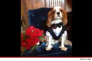 crystal dog tuxedo